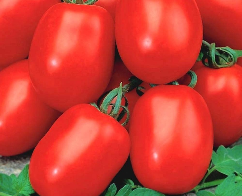 Основная характеристика и урожайность