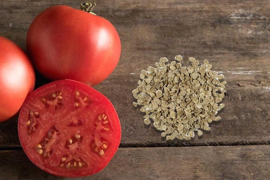 Отбор семян томатов