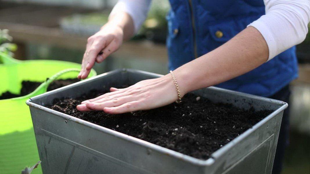 Подготовка грунта для рассады помидор