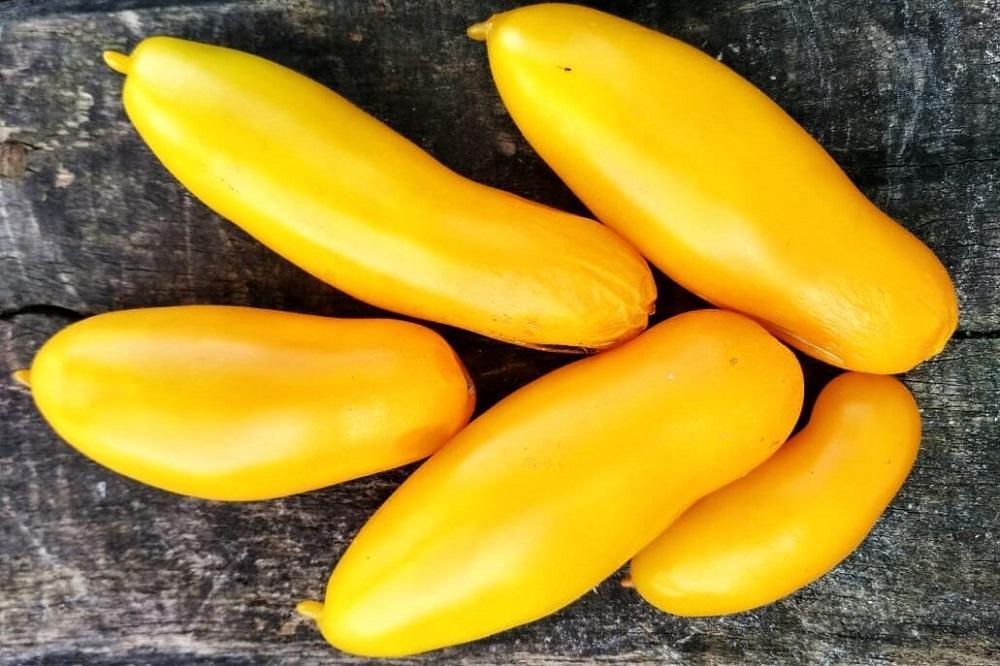 сорт томата Сибирские бананы
