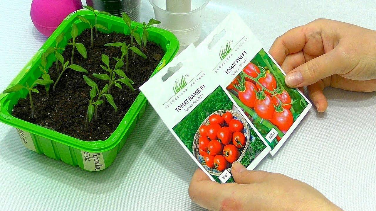 Сроки посева помидор для рассады