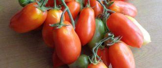 Томат сибирский гроздевой: описание сорта, фото и отзывы