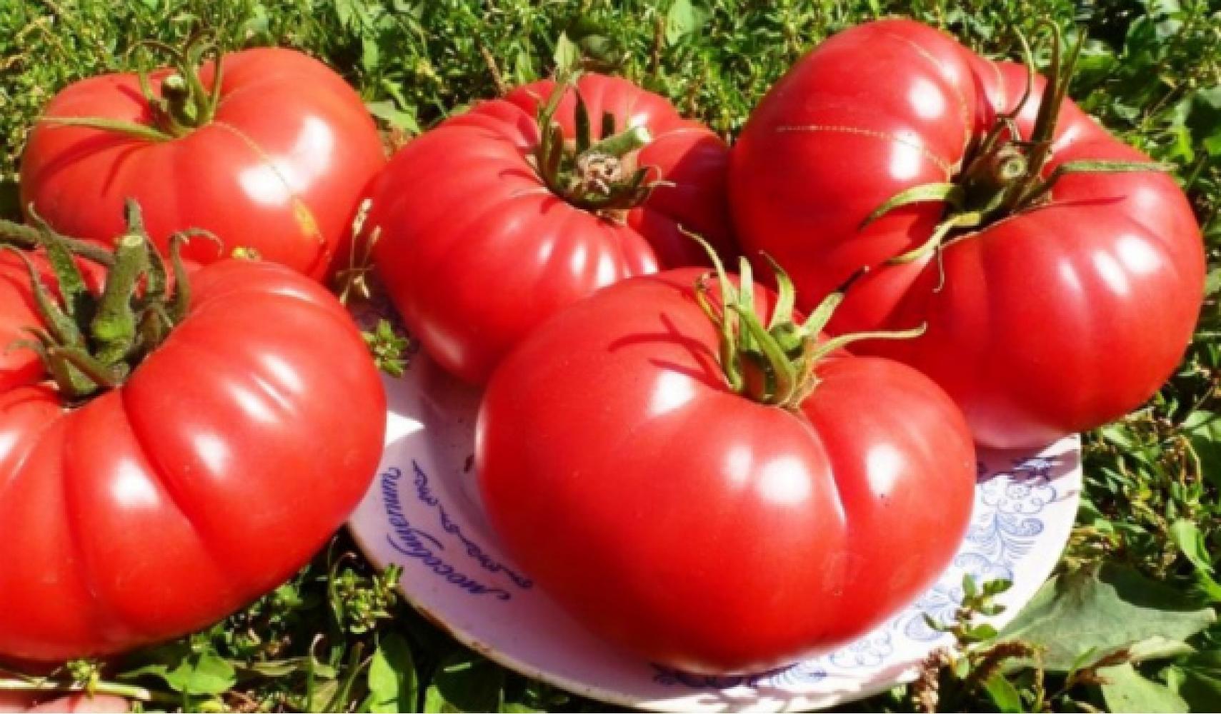 "Внешний вид томата ""Бычье сердце"""