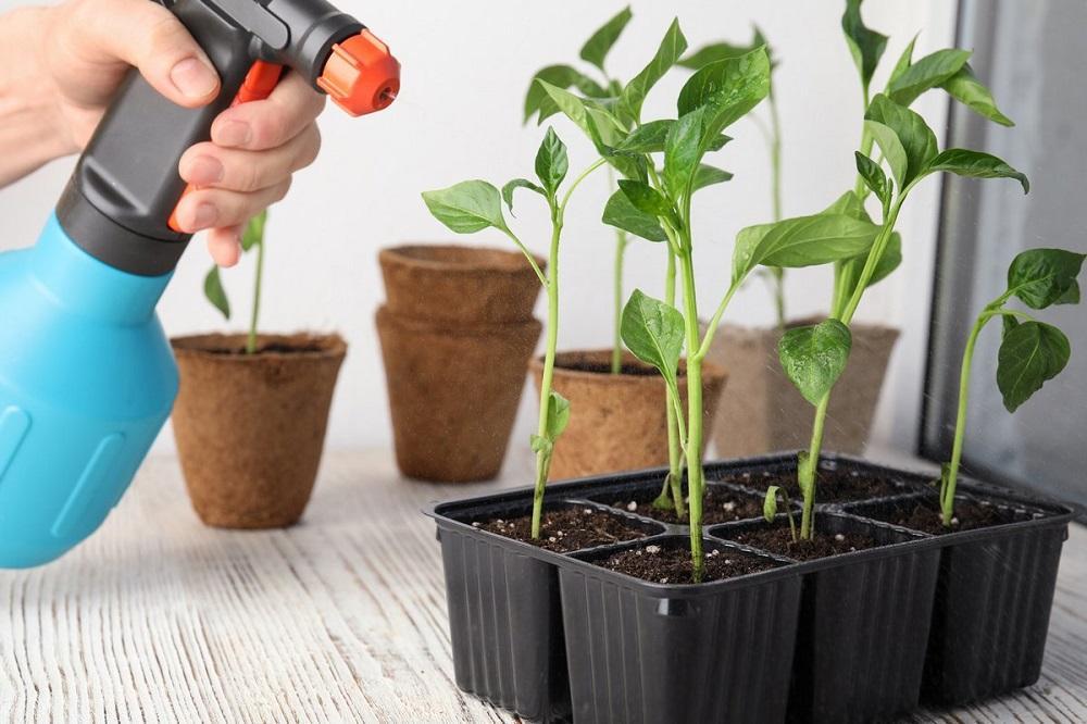 Чем можно обработать растения