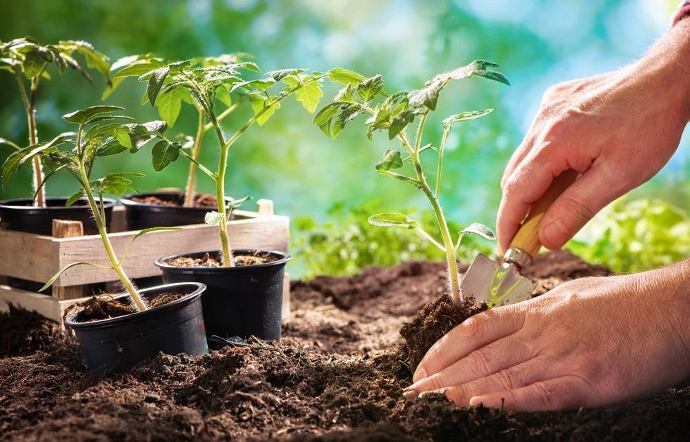 Как лучше посадить