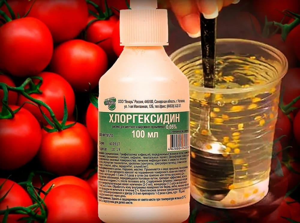 Обеззараживание семян томатов