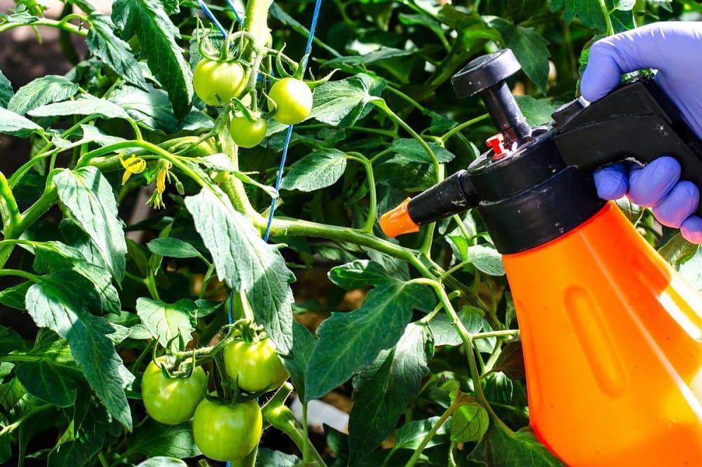 Обработка томатов биологическими препаратами