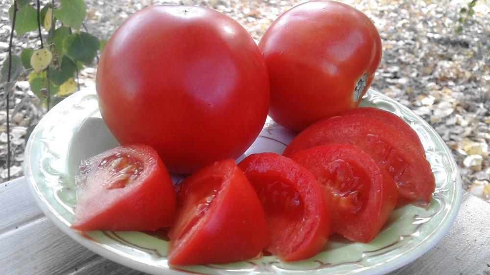 Достоинства и недостатки сорта томатов «Снежный барс»