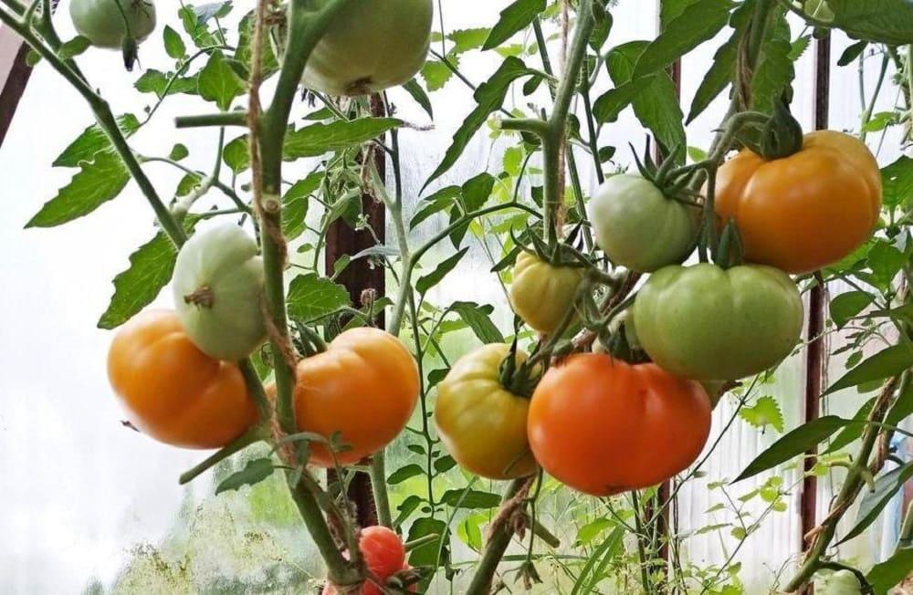 Правила сбора урожая
