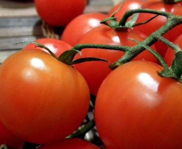 Лучшие сорта томатов для теплиц