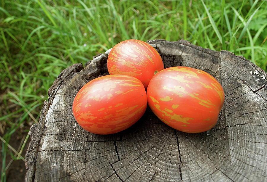 Томат Пасхальное яйцо