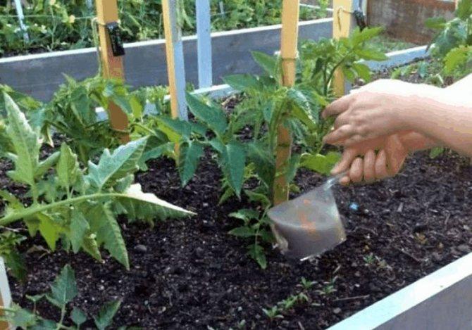 Подкормка томатов золой